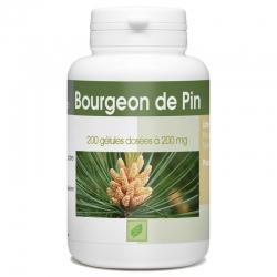Bourgeon de pin 200 gél. x 200 mg