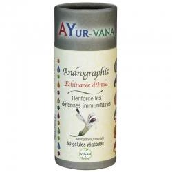 Andrographis - 300 mg x 60 gélules