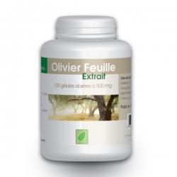 Olivier (extrait de feuilles 7%) 500 mg x 100 capsules