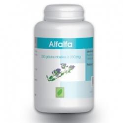 ALFALFA 250 mg x 200 gélules